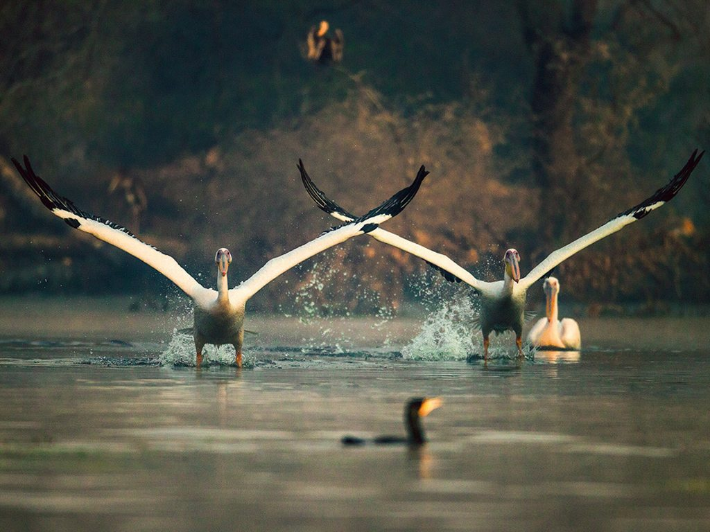 Keoladeo Birds Shiva Bharatpur Bird Sanctuary