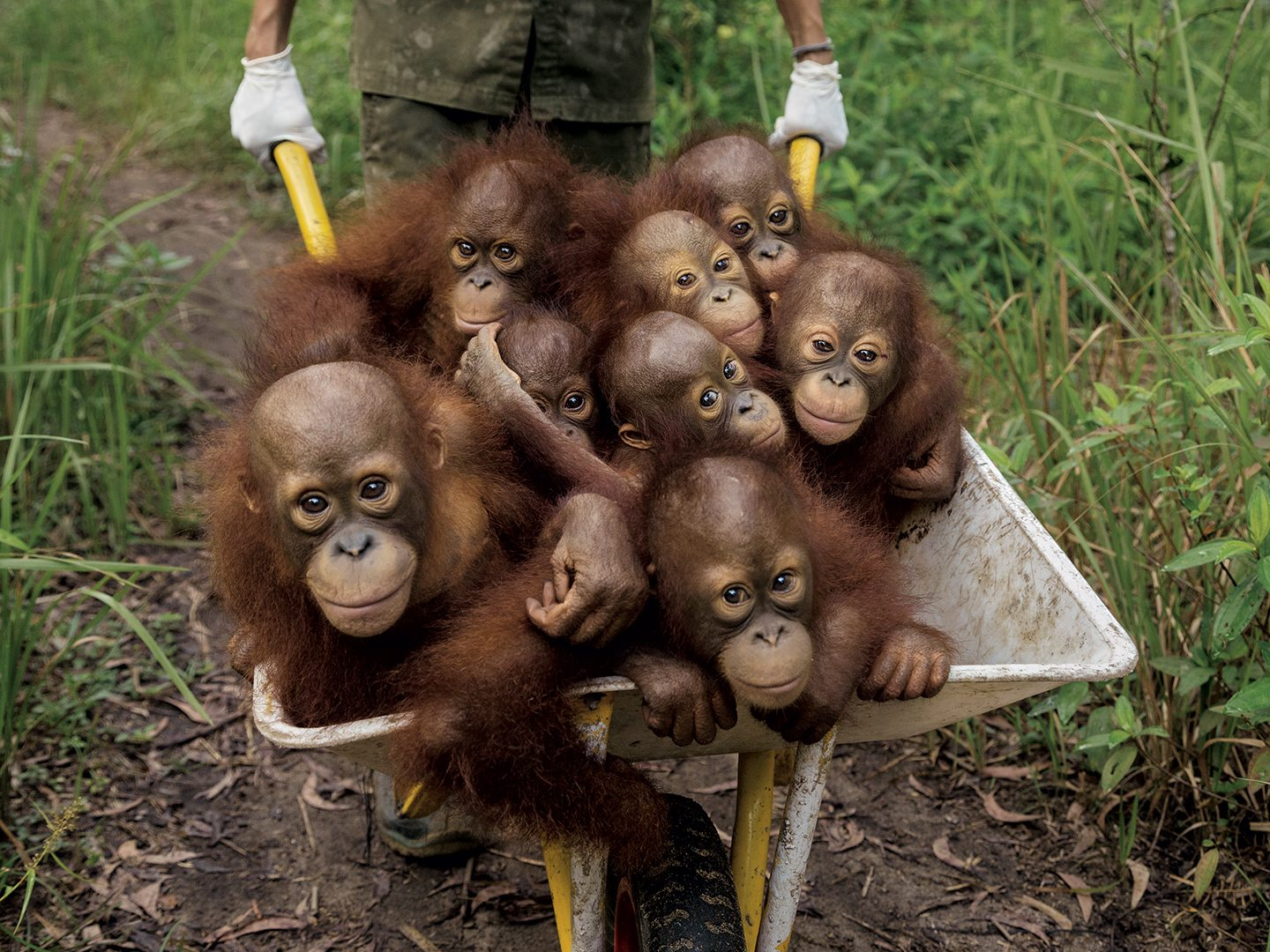 The Dance of Coexistence: The Humans and Orangutans of Indonesian Borneo 5