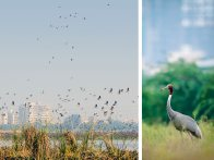 Hiding Among Gurgaon's High-Rises is a Sanctuary Where Birdlife Thrives 1