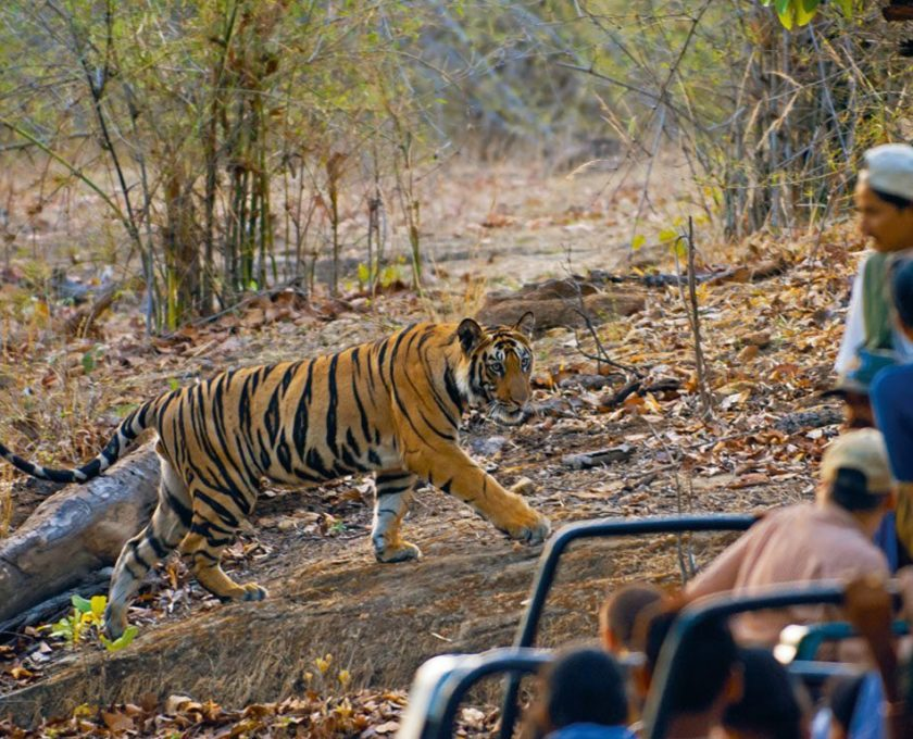magdhi national park Bandhavgarh national park ( devanagari: बांधवगढ राष्ट्रीय उद्यान) is one of the popular national parks in india located in the umaria district of madhya pradesh bandhavgarh was declared a national park in 1968, with an area of 105 km 2  the buffer is spread over the forest divisions of umaria and.