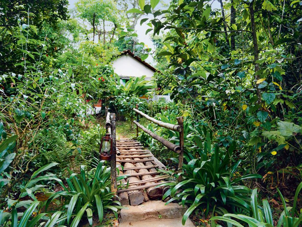 Rainforest Retreat in Coorg encourages visitors to grow their own produce, even in cluttered city apartments. Photo: Sujata Goel