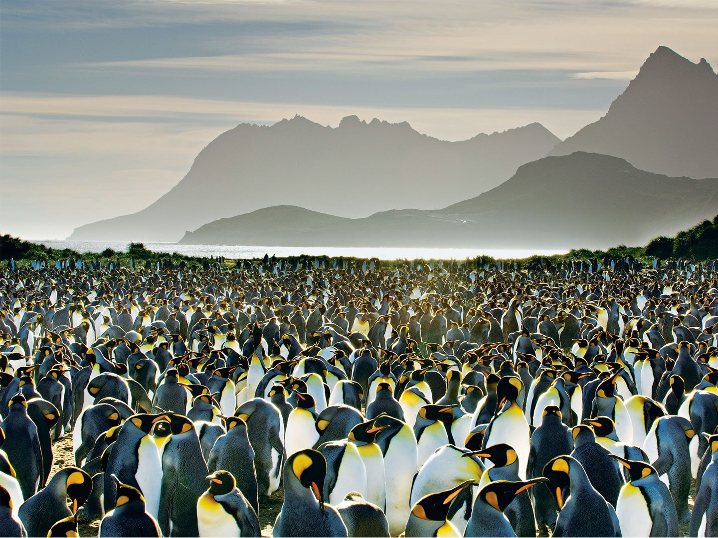 Visitors can view vast colonies of king penguins on South Georgia Island, a stop on Antarctic-bound cruises. Photo: Frans Lanting/National Geographic Creative