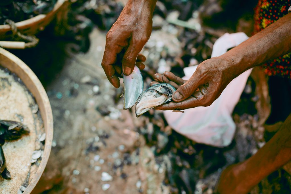 Thalassery is one of the top three producers of mussels in north Kerala. Photo: Aysha Tanya