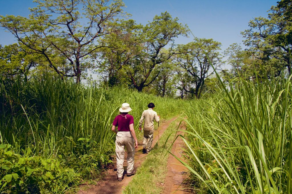 Chitwan National Park Guide: Walking With Pythons and Rhinos in the