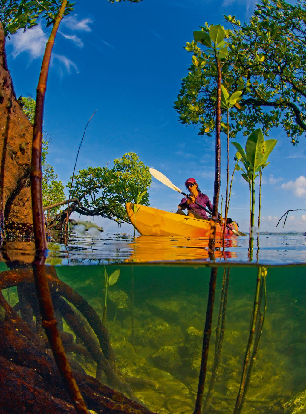 Mangrove Kayaking Andamans Havelock