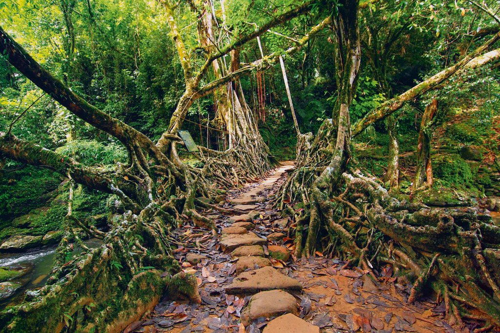 Meghalaya Living Root Bridge Riwai