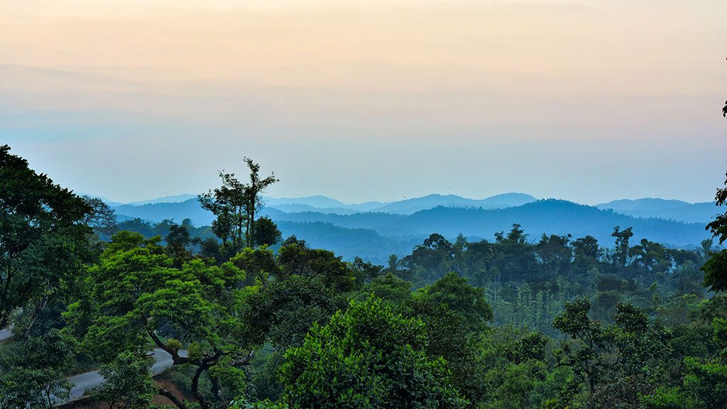 The dense hills of Sakleshpur accommodate Arabica and Robusta coffee varieties, cinnamon trees, and rolling meadows. Photo: Arvind Krishnan/Flickr/Creative Commons (http://bit.ly/1jxQJMa)
