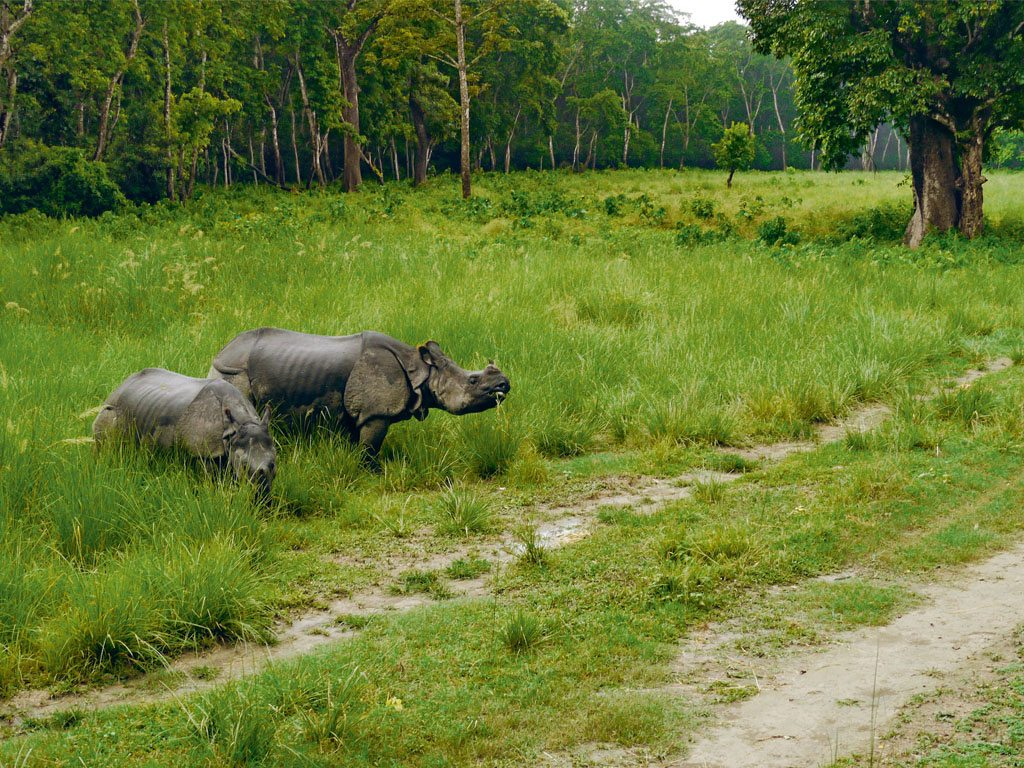Nepal's Chitwan National Park is home to the endangered one-horned rhino. Photo: Amos Chapple/Lonely Planet Images/gettyimages