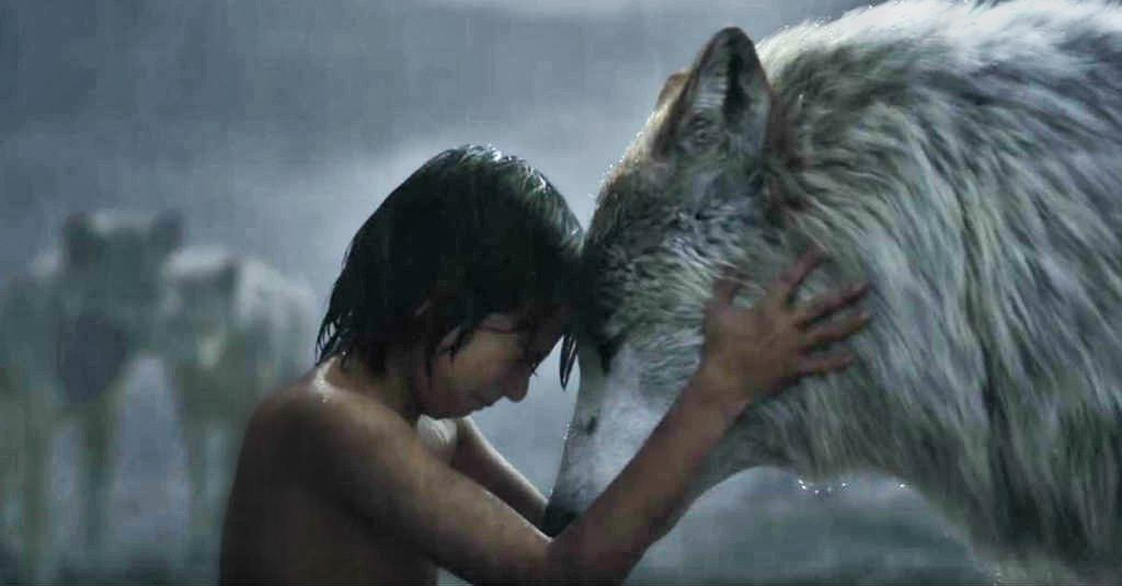 Wolves Gujarat The Jungle Book