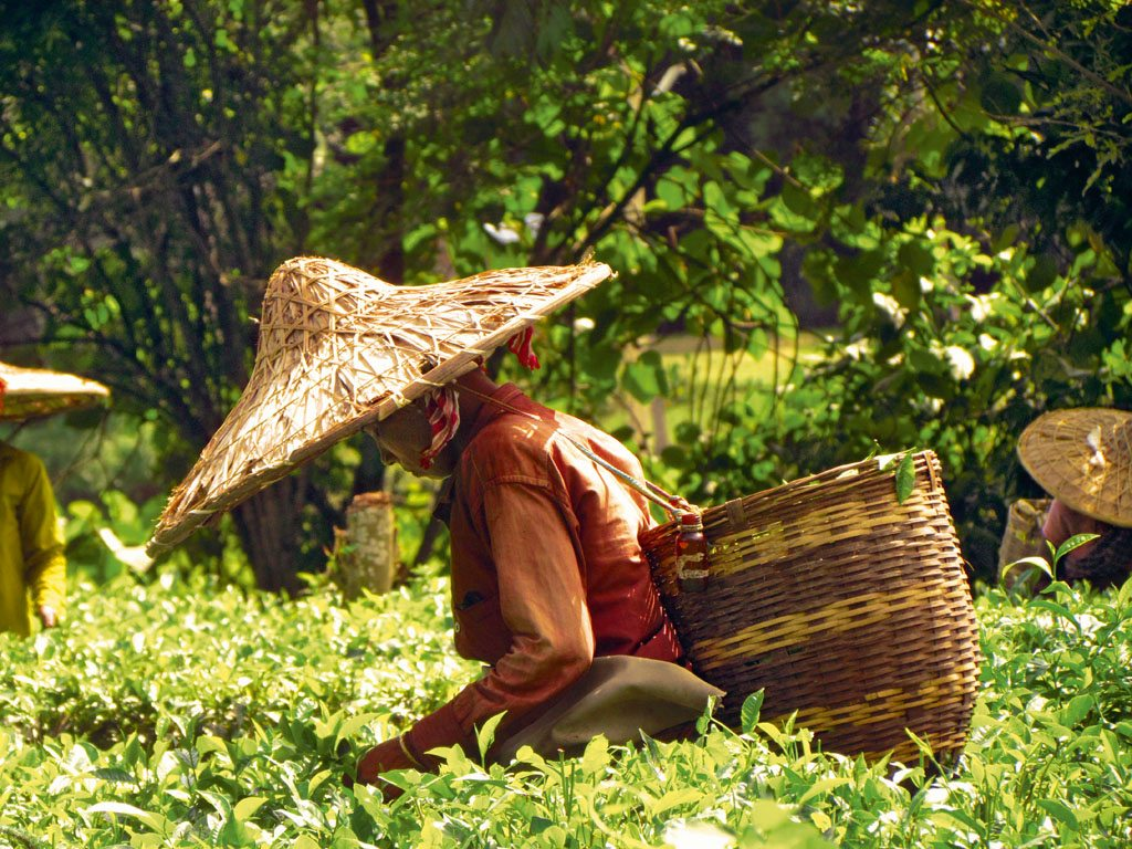 10 Charming Tea Plantations to Stay at Across India 1