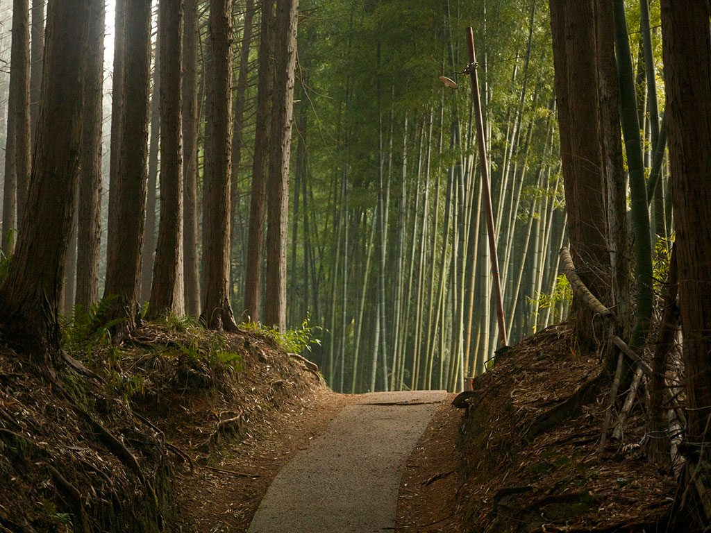 Kyoto Forest Japan