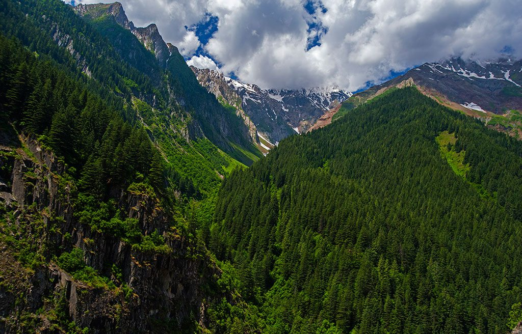 Forest at Pangi Valley in Himachal Pradesh