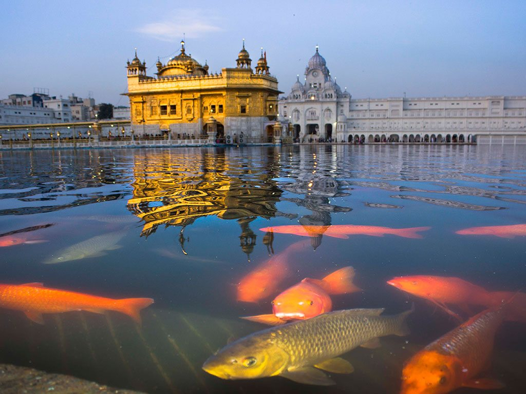 fish in the golden temple, photo by MD Masood Sarwer