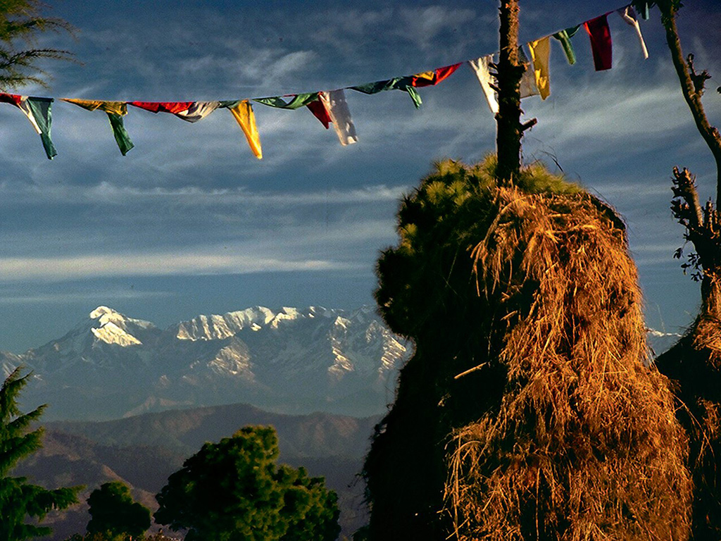 The snow-capped peaks of Nanda Kot, Nanda Devi, and Trishul form the perfect backdrop to mystical Crank's Ridge. Photo: Jaimitra Singh Bisht