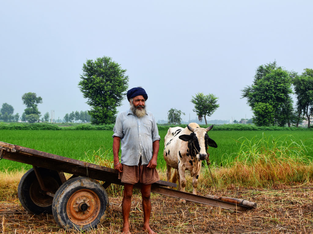 Nothing speaks of monsoon better than green fields. The picture was clicked in Dhariwal Bet village in Punjab.